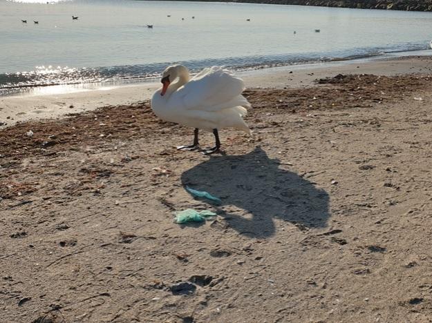 Plasticul rămâne în tractul digestiv al păsărilor timp de 15 luni, ceea ce face mai dificilă absorbția alimentelor reale.