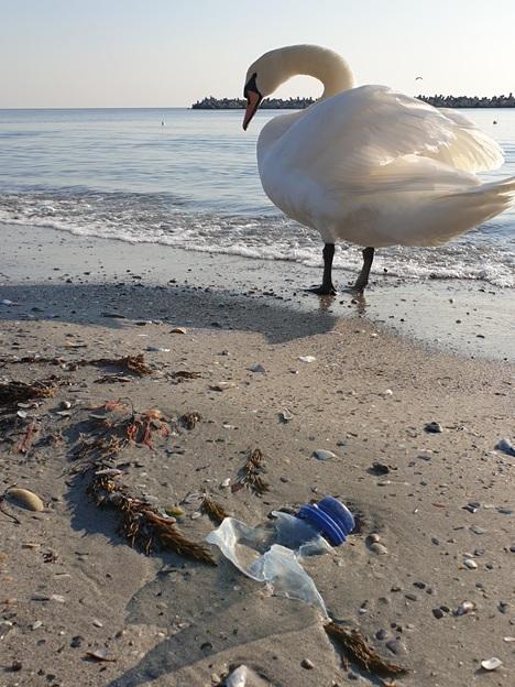 Poluarea cu microplastice afectează viața marină contaminând chiar și ținuturi nelocuite, cum ar fi zona arctică.